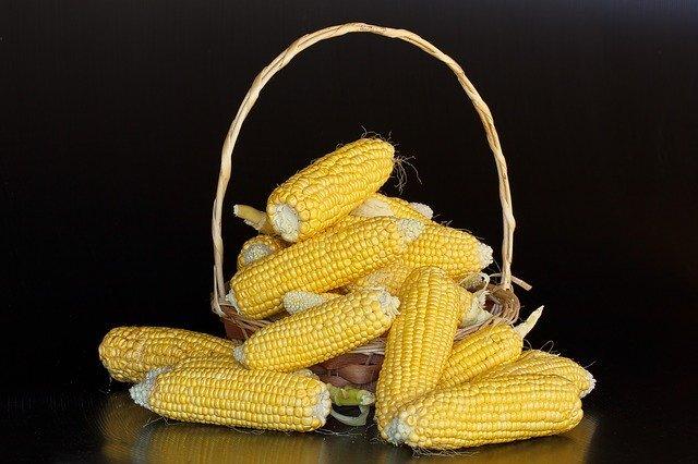 maize-380701_640.jpg
