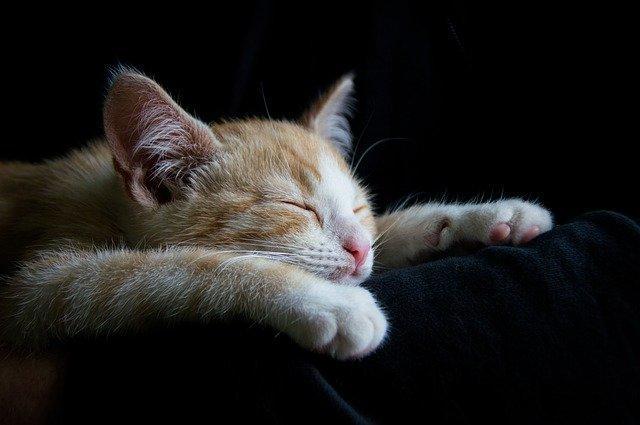 cat-1056661_640.jpg